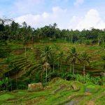 Ubud und Umgebung: Tempel, Reisterrassen und balinesischer Tanz Ubud