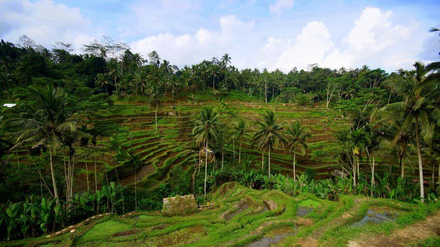 Ubud und Umgebung: Tempel, Reisterrassen und balinesischer Tanz