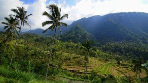 Fiji Reisterrassen im Norden Balis