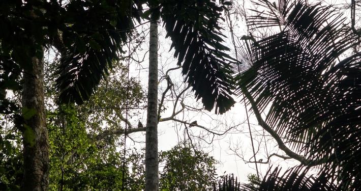Affe Regenwald