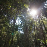 Regenwald Bolivien