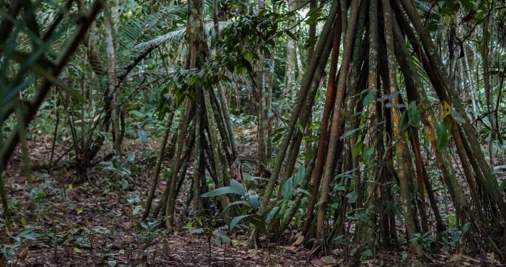 Dschungel Bolivien