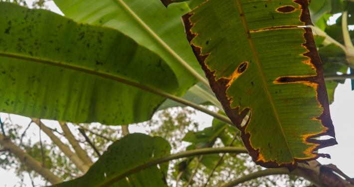 Madidi Nationalpark: Regenwald in Bolivien Regenwald Bolivien
