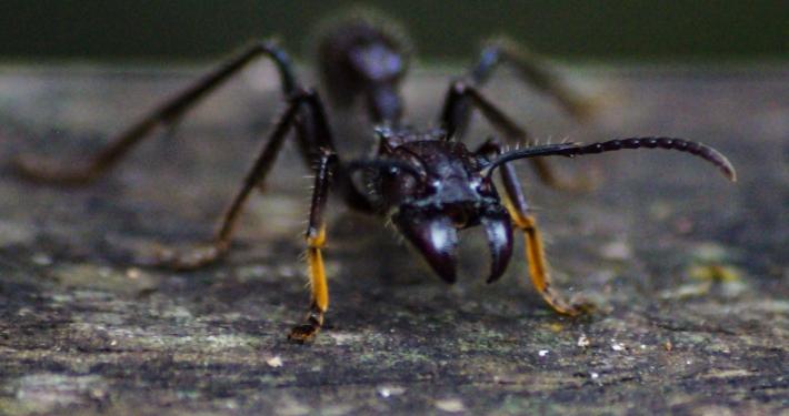 Insekten Regenwald