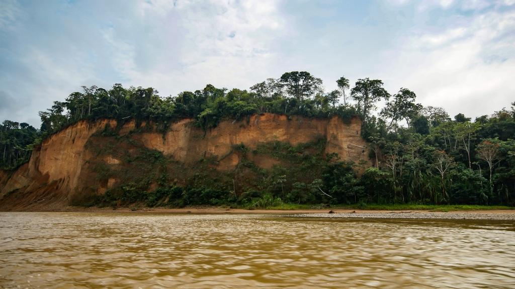 Bolivien Regenwald
