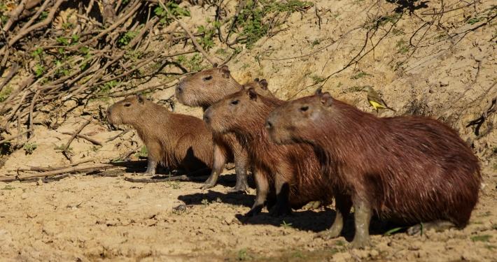 Pampas del Yacuma: wilde Tiere in Bolivien pampas