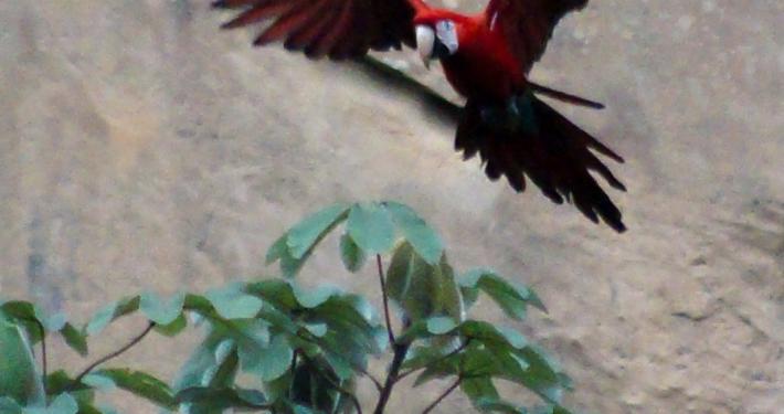 Papageien Regenwald