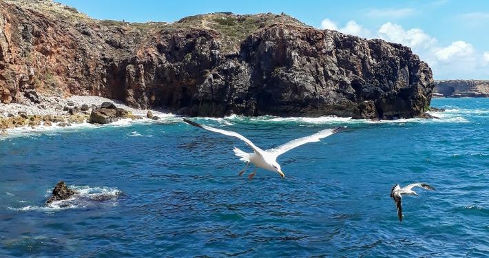Angeln an Portugals Westküste