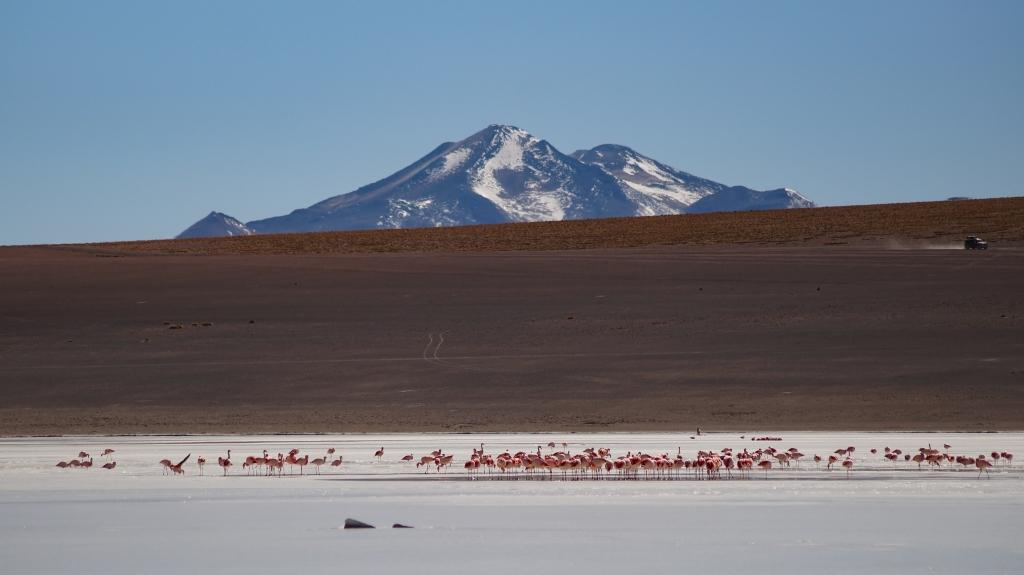 Laguna Kollpa, Bolivien