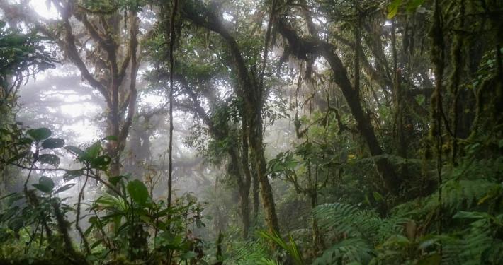 Monteverde Nebelwälder