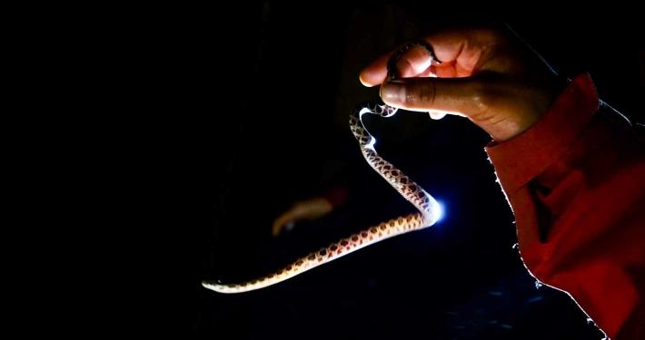 Monteverde nachts im Regenwald