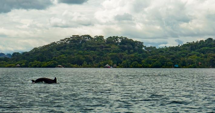 Dolphin Bay Panama