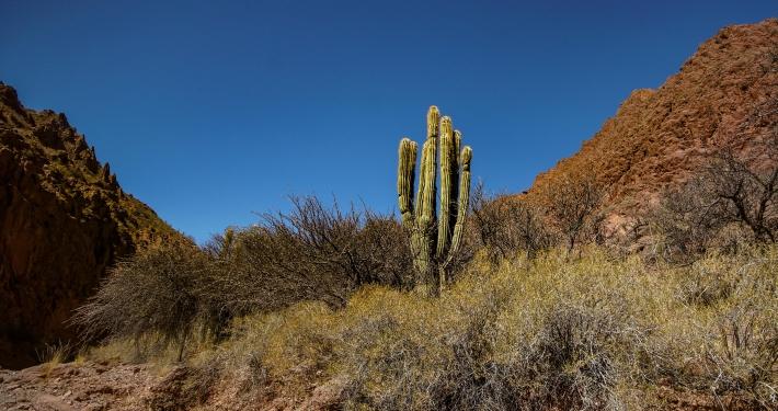 Canyon Tupiza
