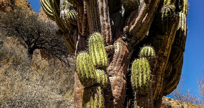 Tupiza Canyon