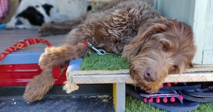 Vanlife Interview mit Raphaela: mit 3 Hunden unterwegs im VW Crafter Vanlife