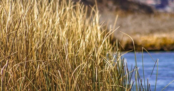 Titicacasee: von Bolivien nach Peru auf 3812 Metern über dem Meeresspiegel Titicacasee