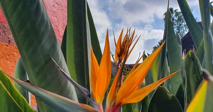 ANIMA Garten Marrakesch