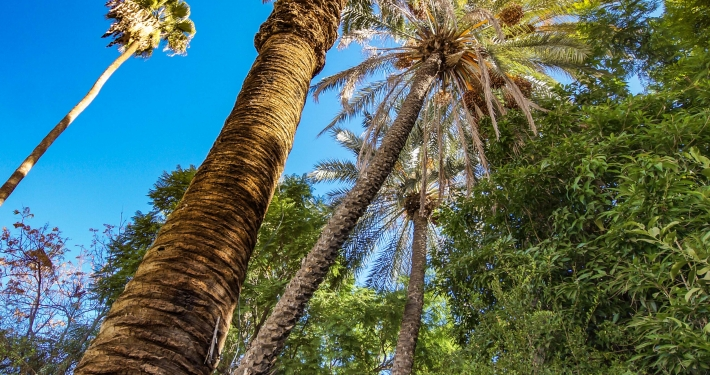 Palmen im Bahia Palast Marrakesch