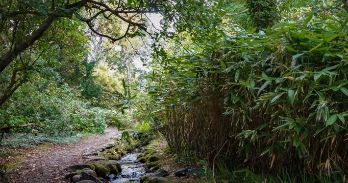Wanderung zum Torc Waterfall im Killarney National Park