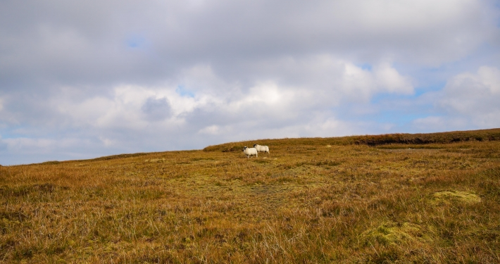 Auf dem Berggipfel beim Devil's Punch Bowl im Killarney National Park
