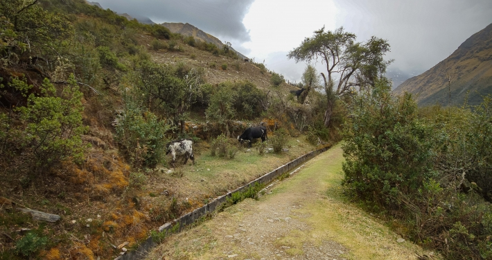 Pfad am Kanal Salkantay Trek