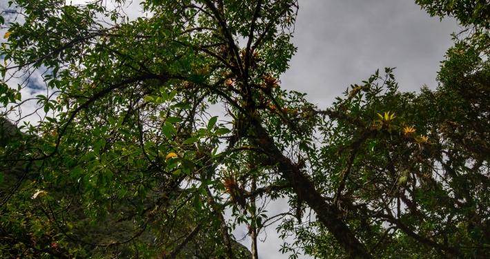 Dschungelpflanzen im Lluskamayu Tal Salkantay Trek