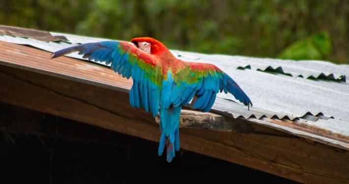 Papagei auf dem Salkantay Trek