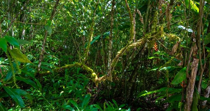 Dschungel au dem Salkantay Trek