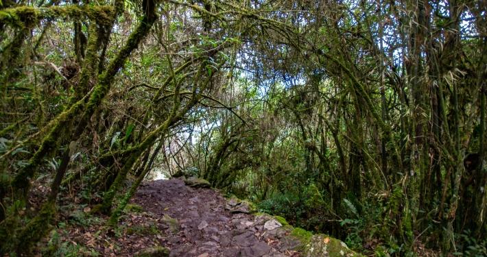 Weg zum Montaña Machu Picchu