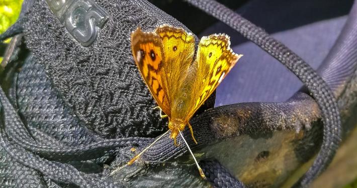 Schmetterling auf Wanderschuh beim Salkantay Trek