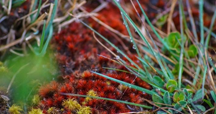 Pflanzen auf dem Weg zur Humantay Lagoon