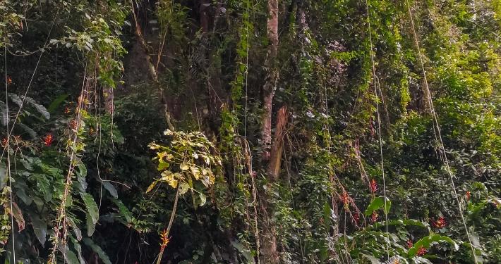 Dschungel auf dem Salkantay Trek