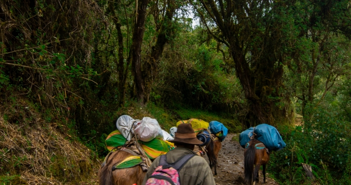 Trampelpfad bergab Salkantay Trek