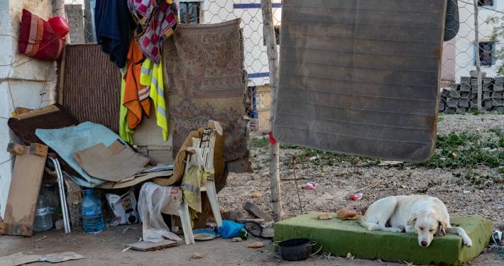 Straßenhunde in Taghazout