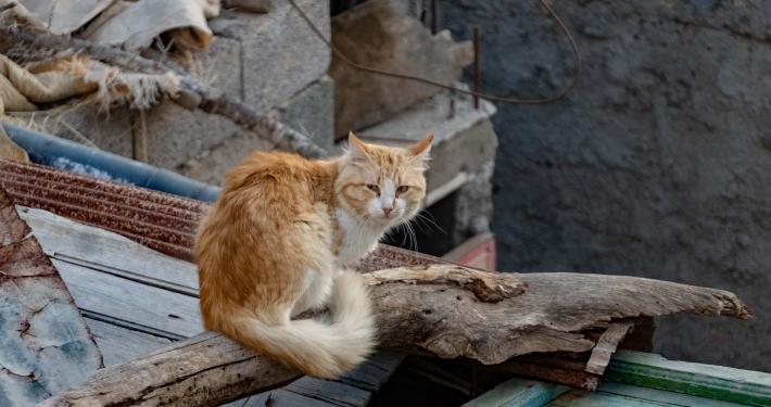 Straßenkatze in Taghazout