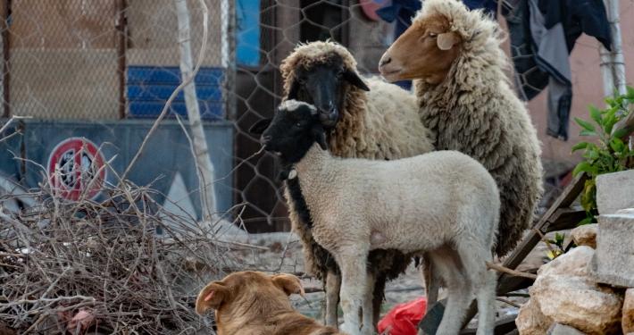 Tierwelt Marokko