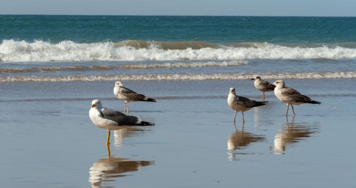 Strand von Taghazout