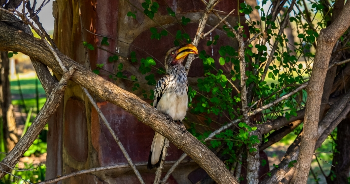 Mosambik und Krüger Nationalpark: 3 Wochen Safari, Surfen und Roadtrip Mosambik