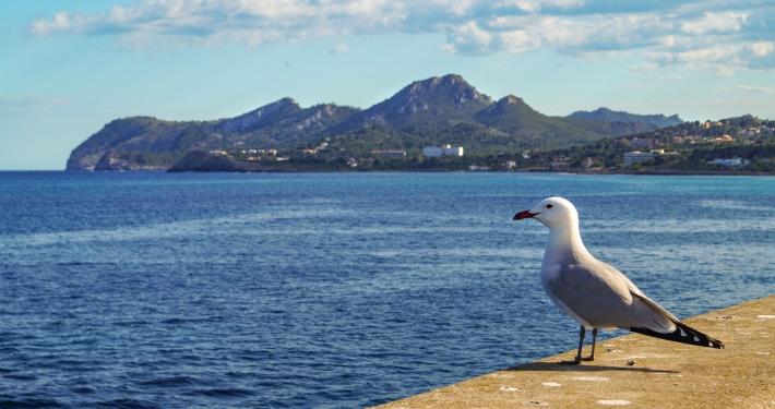 Auf der Hafenmole in Cale Ratjada