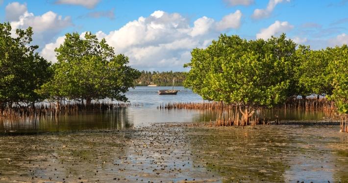 Mangrovensumpf, Mosambik