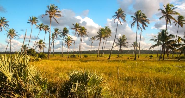 Palmen in Tofo
