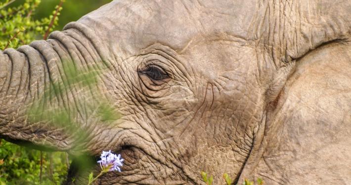 Elefant im Addo Elephant National Park Südafrika