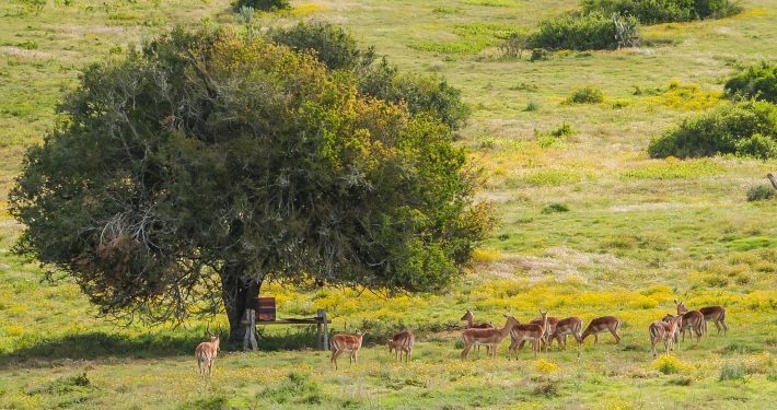Schotia Safaris Game Reserve Südafrika