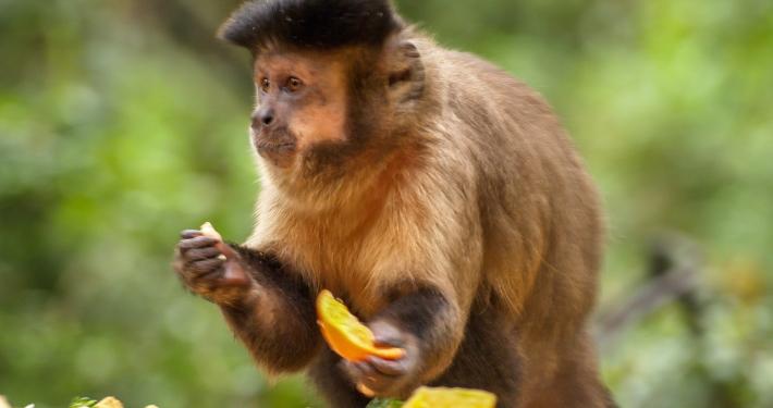 Monkeyland, Plettenberg Bay, Südafrika