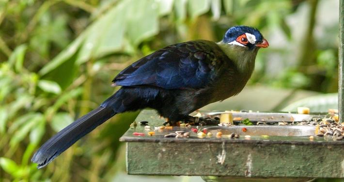 Birds of Eden, Plettenberg Bay, Südafrika