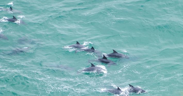 Delfine im Robberg Island Nature Reserve Südafrika