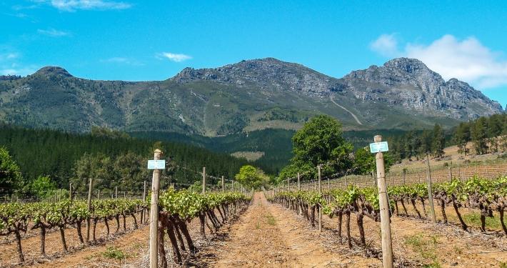 Weingut Delheim Südafrika