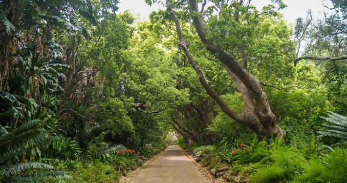 Kirstenbosch Botanical Garden, Kapstadt, Südafrika