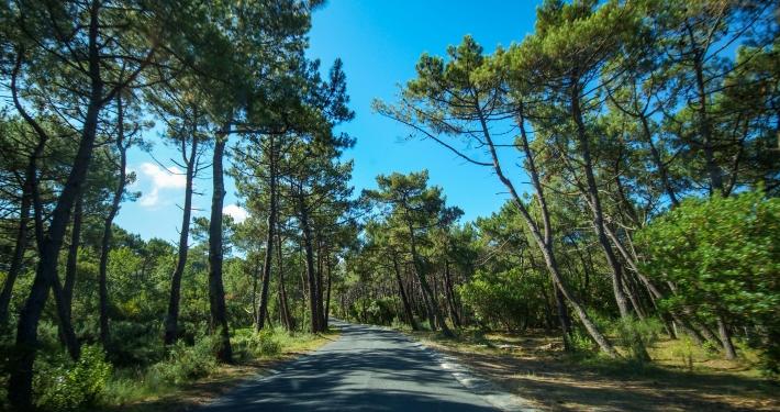 Atlantikküste Frankreich Cap Ferret