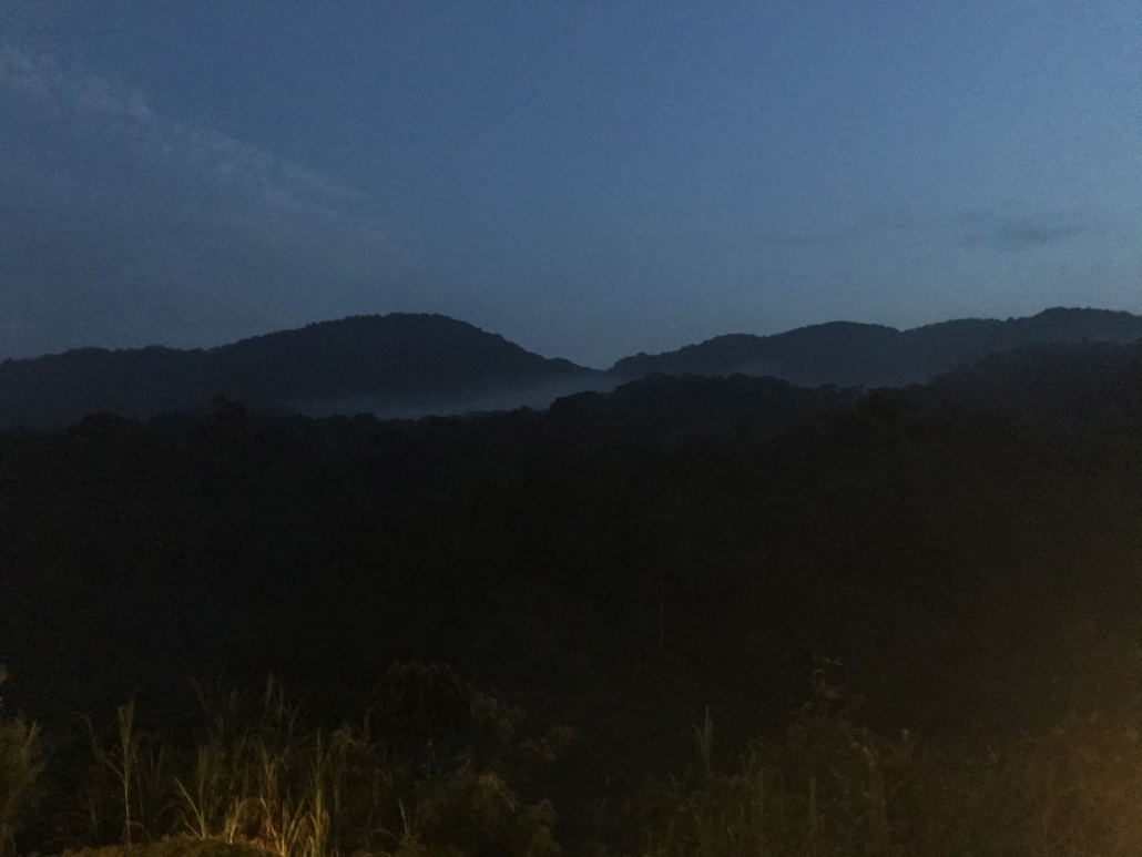 Trekking Berggorillas Ruanda Uganda